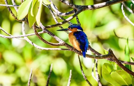 Mangrove eco system